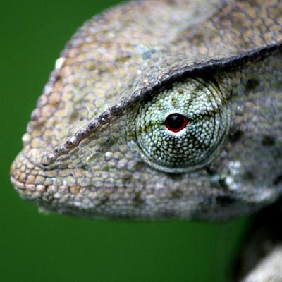 Um camaleão na sala de oração
