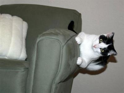 Gatos não respeitam as leis.. da física?