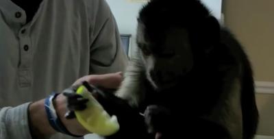 Qual a reação de um macaco ao comer limão pela primeira vez?