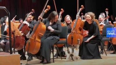 Gatinho invade orquestra em Istambul