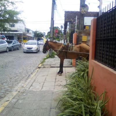 Cavalo na calçada