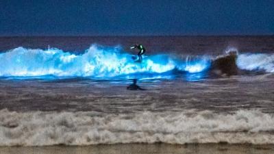 Veja essa incrível praia luminescente, você não vai se arrepender
