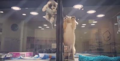 Gato escapa para ficar com seu amigo cão