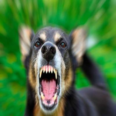 Os dez animais que mais matam pessoas no mundo