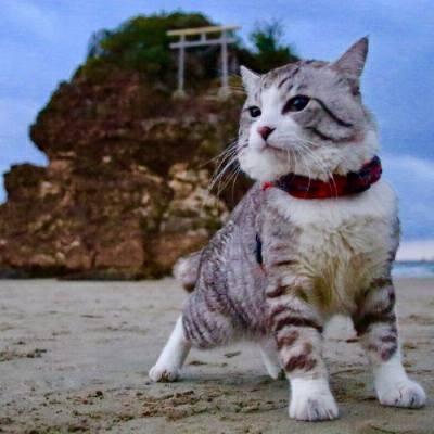 Nyankichi, o gato mais fotogênico do Japão