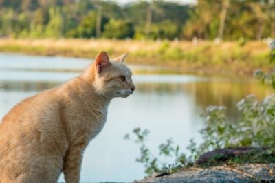 Austrália quer exterminar 2 milhões de gatos até 2020 usando petiscos envenenado