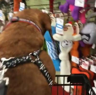 Leve seu cachorro para fazer compras