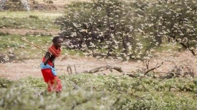 Enxames de gafanhotos de proporções bíblicas invadem países da África
