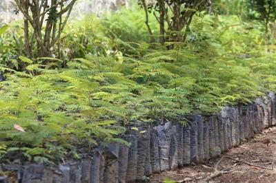 Reflorestamento e Preservação na Mata Atlântica e Caatinga