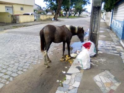 Animais pelas ruas do Cordeiro
