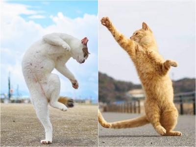 12 Fotos na hora certa transformam gatos sonolentos em guerreiros ninjas