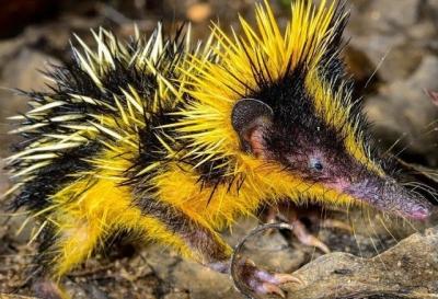Confira algumas espécies de animais que você nunca viu antes #3
