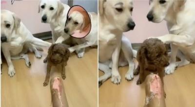 Cãezinhos entregam seu amigo sem pensar duas vezes