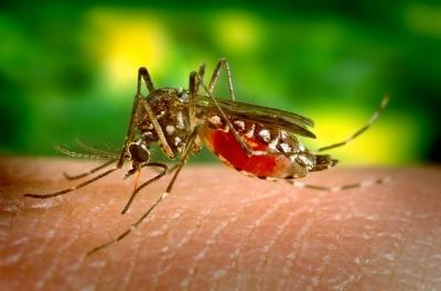 O aquecimento global vai permitir a expansão de doenças tropicai