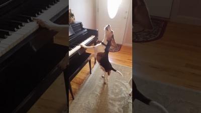 Mais um cão que queria ser pianista