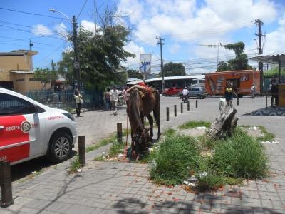 Cavalo em ponto de Táxi
