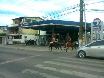 Cavalos pelas ruas do Recife