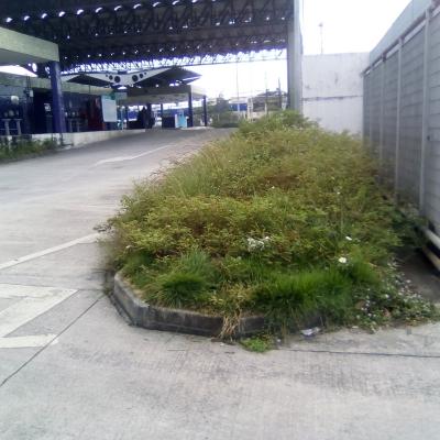 Mato no terminal de ônibus