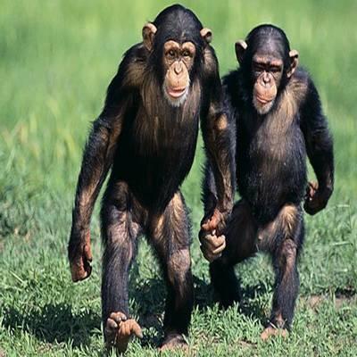Alguns animais com as mentes mais avançadas do planeta
