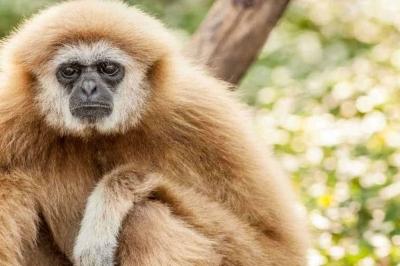 Várias espécies animais podem ser vulneráveis à infeção por SARS-CoV-2