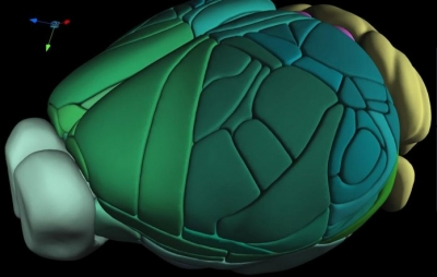 Cientistas criam mapa tridimensional completo de cérebro de rato