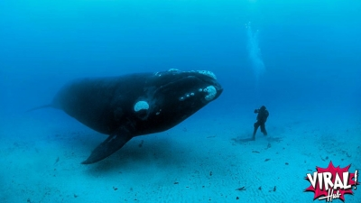 Porque animais marinhos são tão grandes?