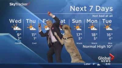 Cachorro atrapalha a previsão do tempo ao vivo