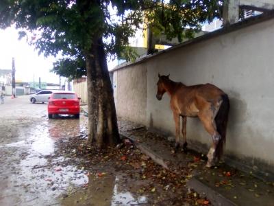 Cavalo esperando a chuva passar