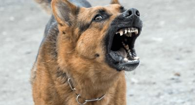 Cuidado, cão bravo