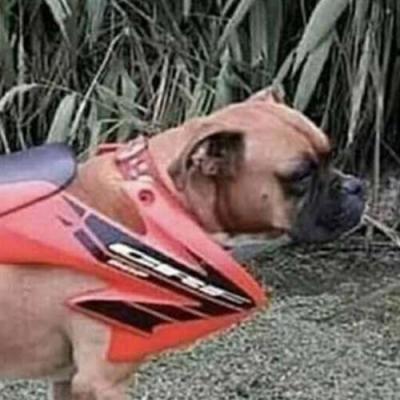 Cachorro turbinado