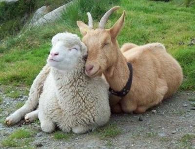 Essas imagens mostram amizades improváveis do reino animal