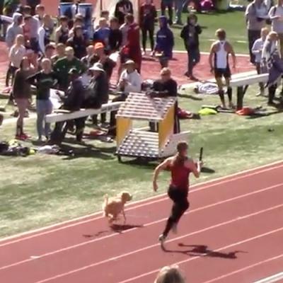 Cachorrinha invade competição e vence corrida de revezamento nos EUA