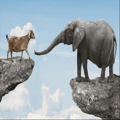 Existe alguma explicação biológica para o altruísmo?