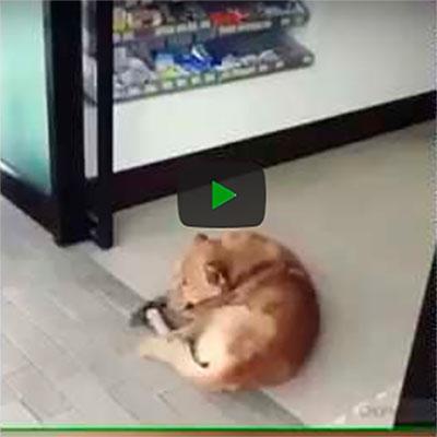 Esse cachorro não tá nem aí pra vida