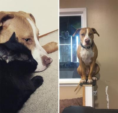 Cães que acham que são gatos #2