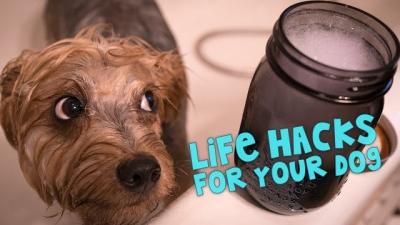 11 Life Hacks para o seu cão