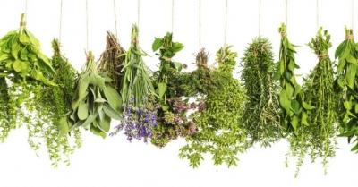 Como semear ervas aromáticas
