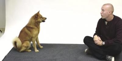 Como cães reagem a um humano latindo?
