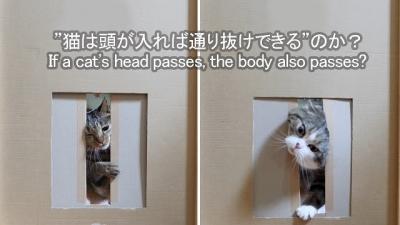 Homem decide testar o quão fino gatos podem ficar