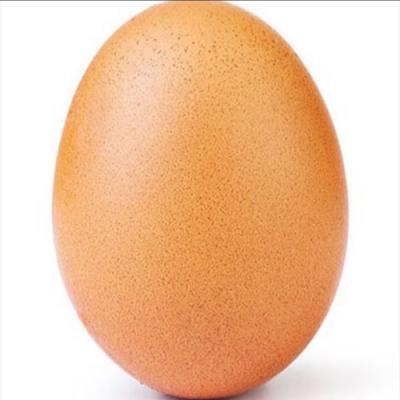 A incrível biomecânica do ovo