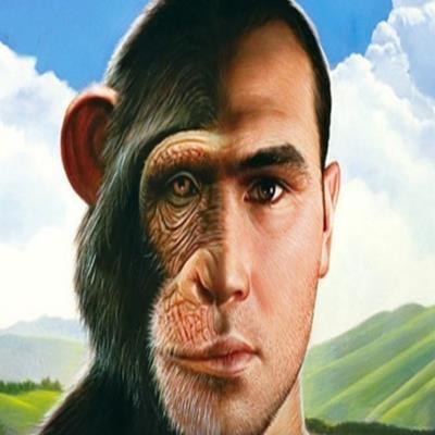 Encontrado estranho macaco dotado de feições humanas