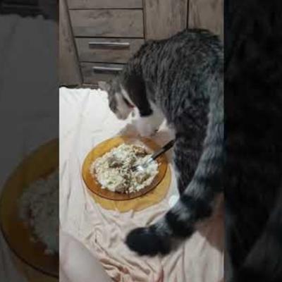 Quando o gato é sincero sobre a sua comida