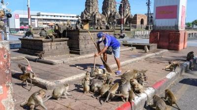 Macacos invadem cidade na Tailândia