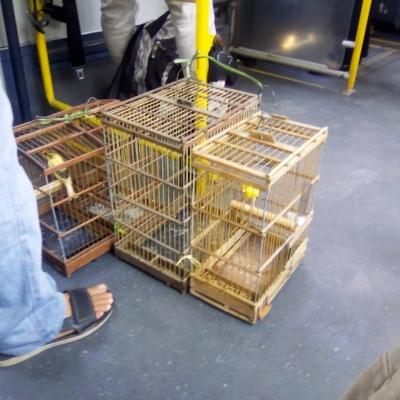 Passarinhos dentro de um ônibus