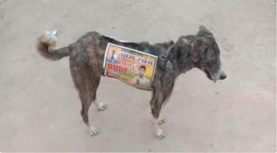 Candidatos na Índia estão usando cães de ruas como outdoors ambulantes na campan