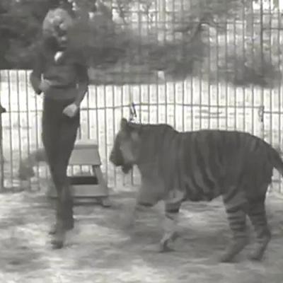 Garota luta com tigre de 200 kg - filmagem rara