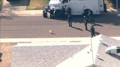 Pug enfrenta equipe da SWAT sozinho.