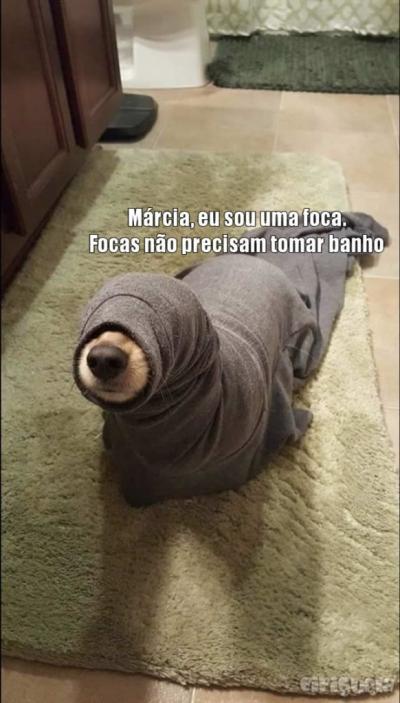 Uma foca diferente