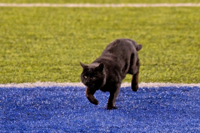 Gato invade estádio de futebol americano e causa confusão