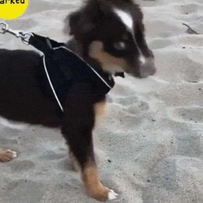 Cachorrinho comendo areia